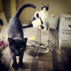 ABW brewery cats